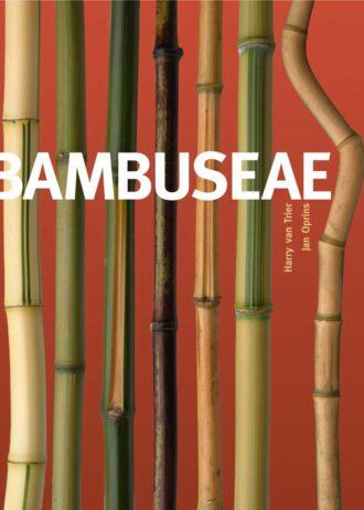 bambusea_2